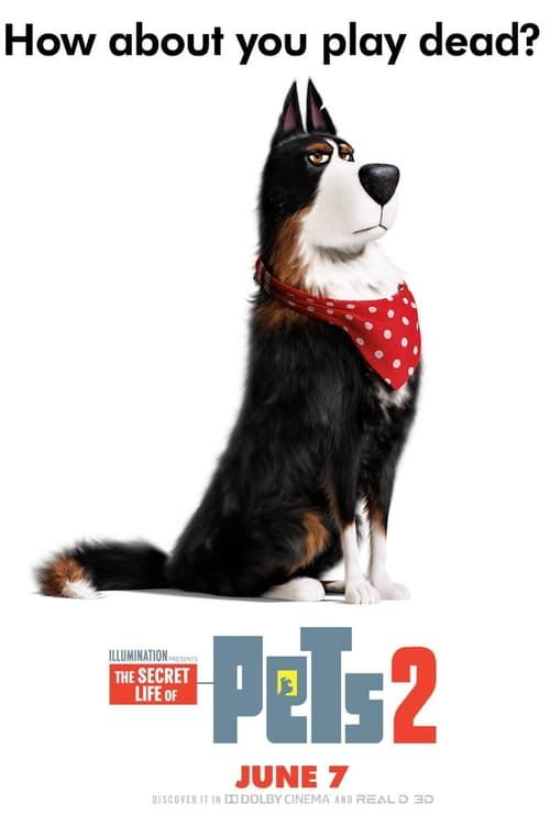 The Secret Life Of Pets 2 Streaming Vf Film Complet Hd Streamcomplet Film Streaming Secret Life Of Pets Pets Secret Life
