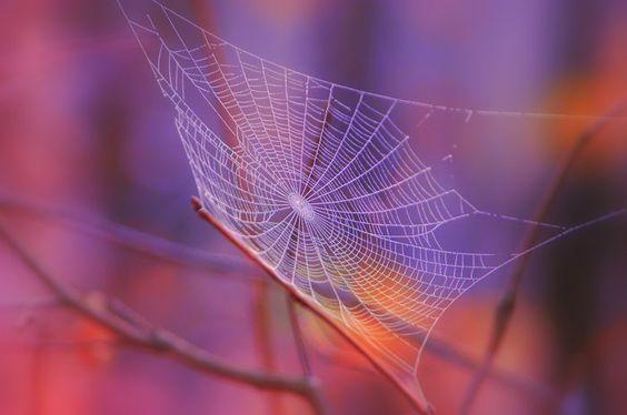 Web of Deceit by Scott Sutton