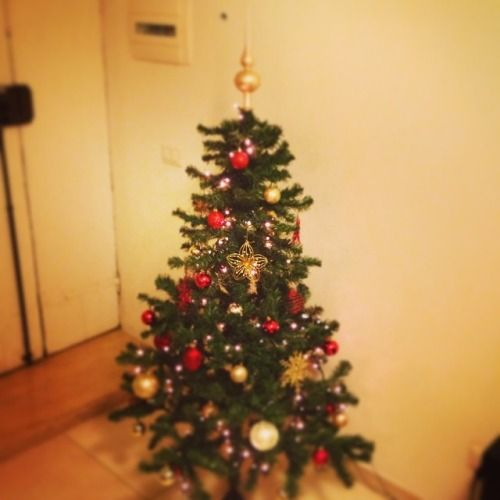 littlecloudydreams:  Christmas Tree ❤️❤️ #Christmas #ChristmasTree #ChristamsDecorations #Natale #AlberodiNatale #tree #decorations #decorazioni #abete #luci #lights #red #gold #rosso #oro #green #verde #holiday