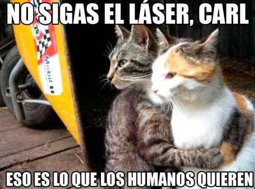 Memes Del Dia Del Gato No Sigas El Laser Eso Es Lo Que Los Humanos Quieren Memesg Memes De Gatos Divertidos Imagenes Divertidas De Animales Fotos Con Gatos