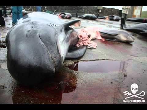 #StandUp250 for Sea Shepherd Crew and Grind Whales on faroe