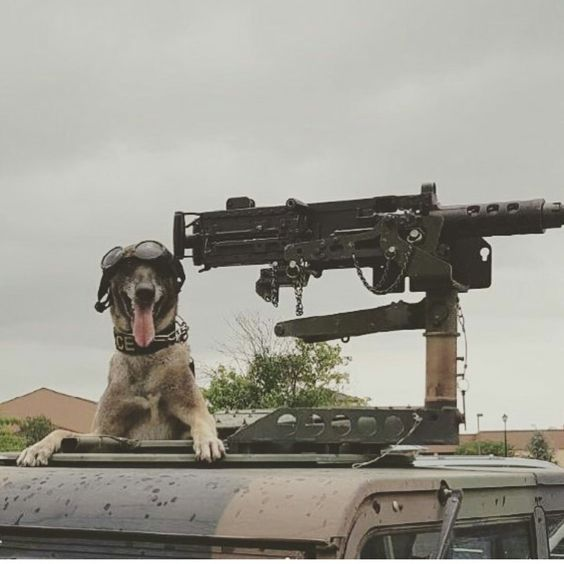 """MWDTSA on Twitter: """"Today, WE RIDE! #HopIn #pewpew #MWD #K9 #military #doggles https://t.co/Ug2A402rbX"""""""