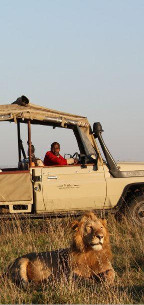 Hyena Vs Elephants Ass HttpwwwyoutubecomwatchvKcFryuzQ - 10 best safaris in africa