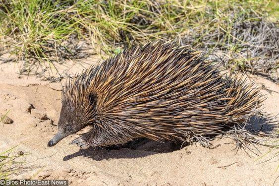 24 απίστευτες φωτογραφίες από την Αυστραλία που δείχνουν από άλλο κόσμο