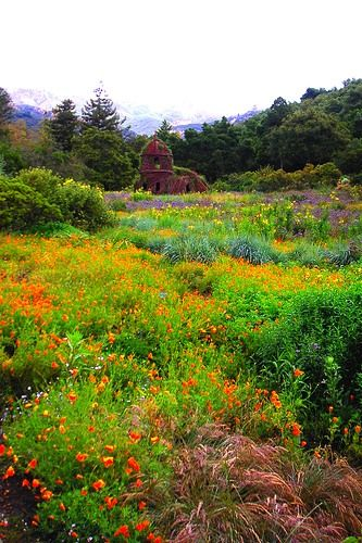 Gardens California Homes And Poppies On Pinterest