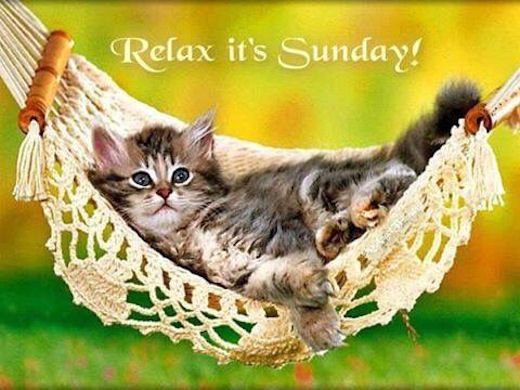 Relax its Sunday relax kitten sunday sunday quotes happy sunday sunday quote happy sunday quotes: