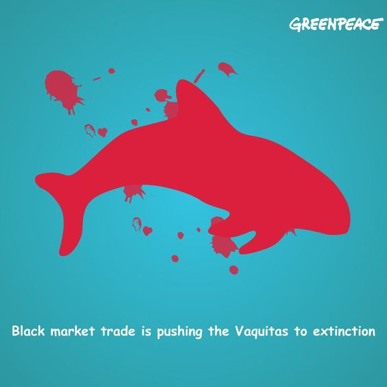Save the Vaquita, sign to fight illegal trade in Hong Kong http://bitly.com/1cYOcIM