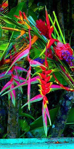 Tropical garden (heliconia) #flower#summer#carlabikini