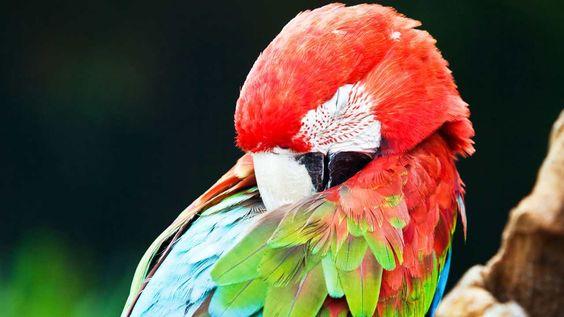 How Much Do Pet Birds Sleep? - Howcast.com