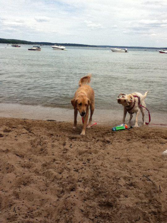 South Higgins Lake State Park Dog Friendly Beach State Parks