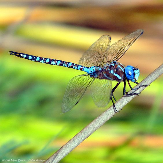 Dragonfly / Always makes me think of my friend who passed..... Missing you always love ~