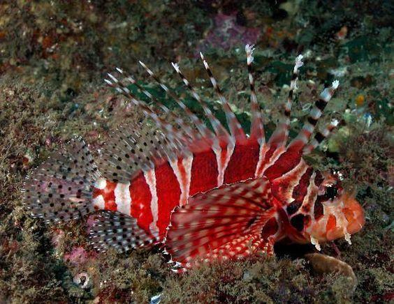 Freshwater tropical fish. #fish