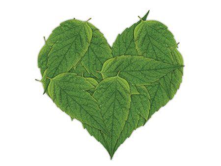 Chás que tratam e protegem o coração O coração é um dos órgãos mais importantes do nosso corpo, cuidar dele é um dever se você busca uma vida longa e saudável. O problema está no fato de que ele possui uma grande facilidade em desenvolver doenças. Frequentar regularmente um cardiologista e evitar o consumo de…