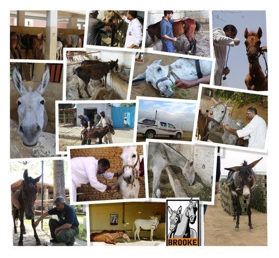 Dieren, dierenartsen en verzorgers in verschillende Brooke-klinieken