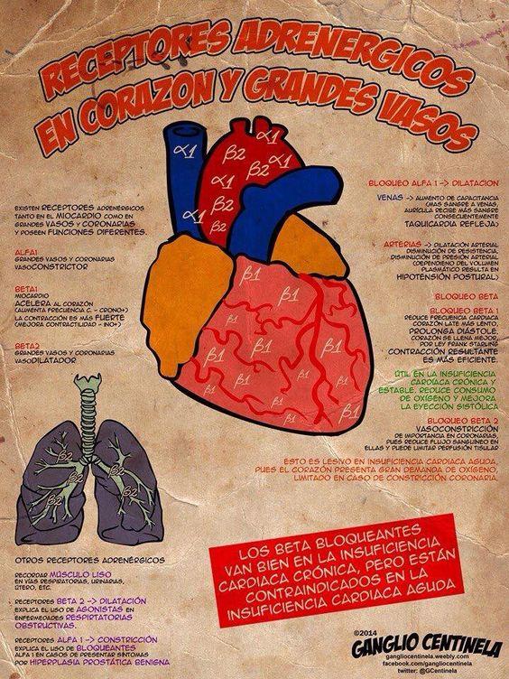 enfermedades del corazon pdf free