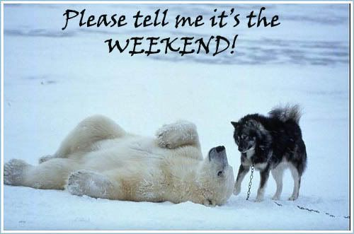 Polar bear and dog waiting for weekend.: