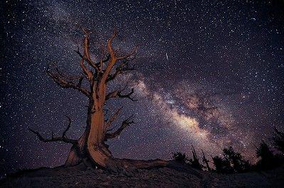 Shane McDermott  Ancient Stargazer   Photography  H 24in x W 36in  Frame: H 18in x W 26in