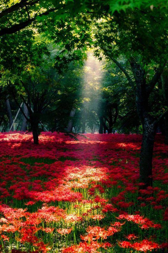 Pin Ot Polzovatelya Photolike Na Doske Nature Wallpaper Picture