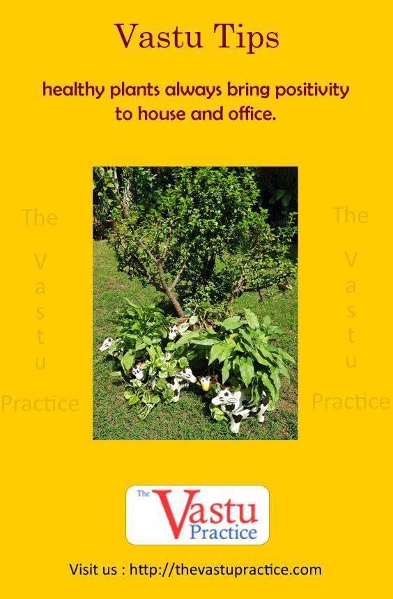 Healthy Plants Always Bring Positivity To House And Office Mango Tree Represents Venus Whi Vastu Shastra Country Contemporary Decor How To Feng Shui Your Home