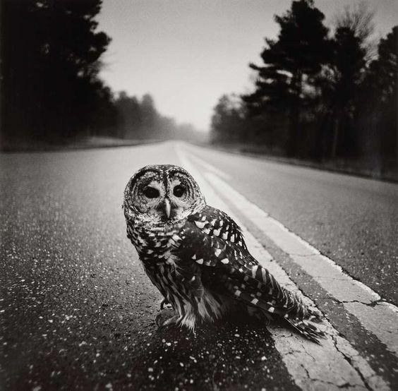 Arthur Tress - Owl on road, 1975