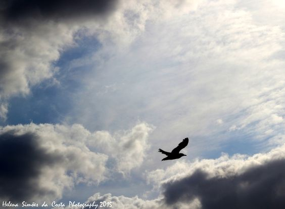 Bird in the Sky, Photo credits by Helena Simões da Costa © 2015 #sky #clouds #birds