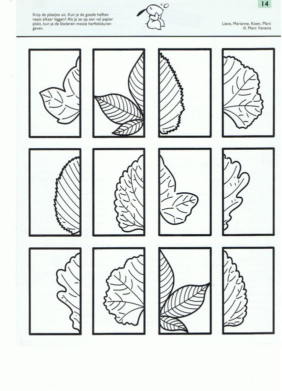 Cut and match these leaves - great symmetry activity!: