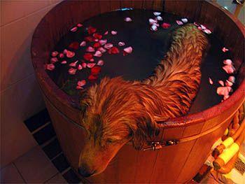 Ofurô para cães? - Webanimal.com.br - cães - animais - animals - animales - Dog - terapia para animais