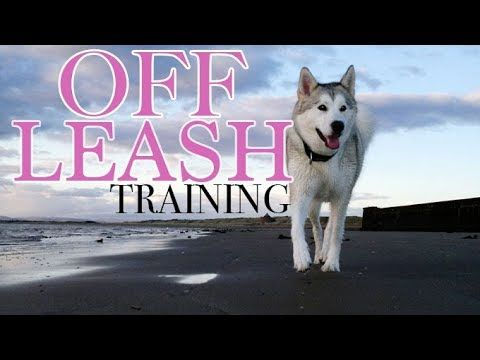 Teach Your Husky To Be Off Leash Forever 3 Easy Steps Youtube