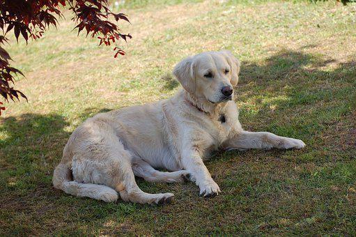 Labrador For Sale Kent It S Time You A Labradorpuppiesyeovil