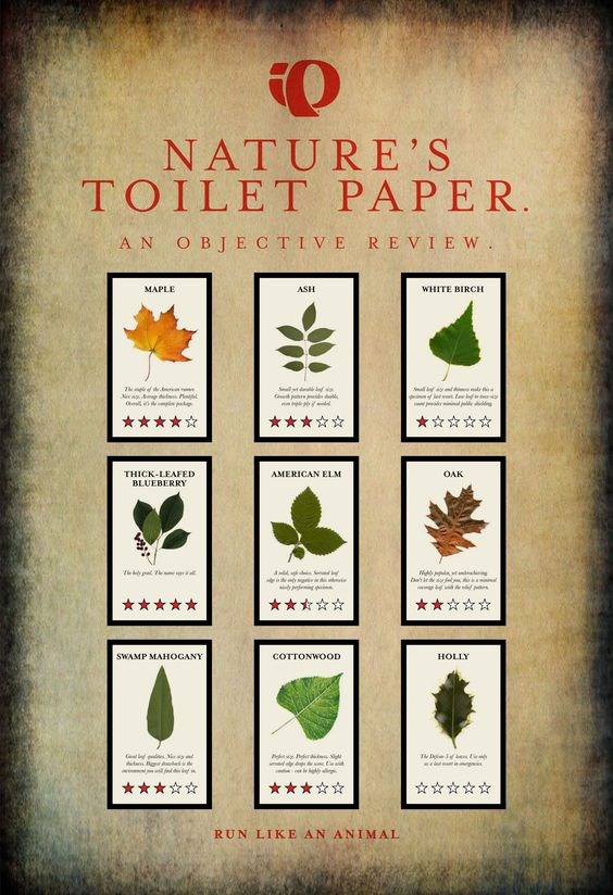Nature's Toilet Paper....notice the Holly leaf doesn't have any star ratings... :)
