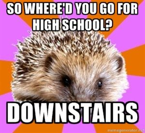 #homeschooledhedgehog