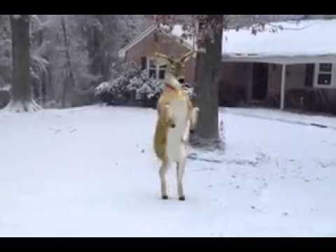 Renne natalizie che ballano - YouTube
