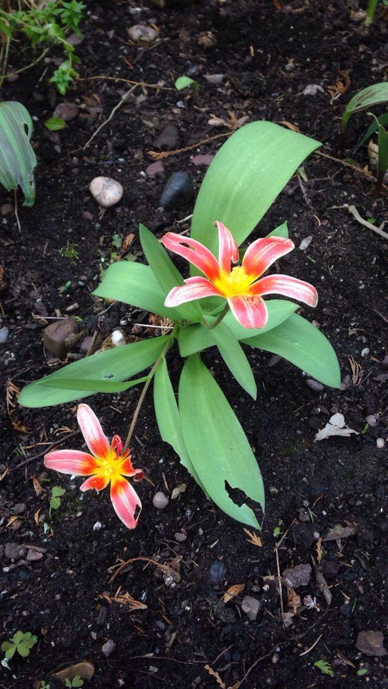Flower in the garden