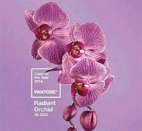 Color Pantone 2014 : Radiant Orchid u Orquidea Radiante - Novias.ec Bodas Ecuador Matrimonios Organizacion de Eventos Vestidos