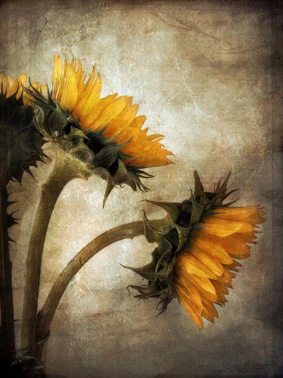 Resultado de imagem para sunflowers in the sun