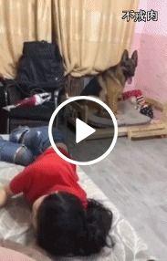 Para que grade de proteção quando se tem um cachorro protetor de queda