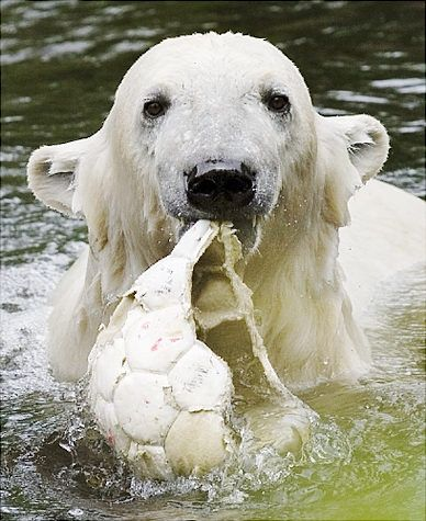 Say, can I get a new ball?  This one is defective...