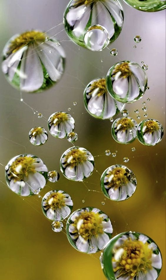 Art- Flowers in raindrops/ digital art