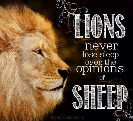 Lion Sheep Quote: Lions Never Lose Sleep Over The Opinions Of Sheep