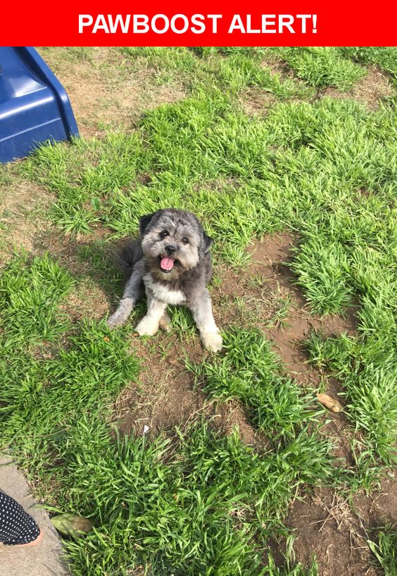 Is this your lost pet? Found in Riverside, CA 92501. Please spread the word so we can find the owner!    Nearest Address: Center Street, Riverside, CA, United States