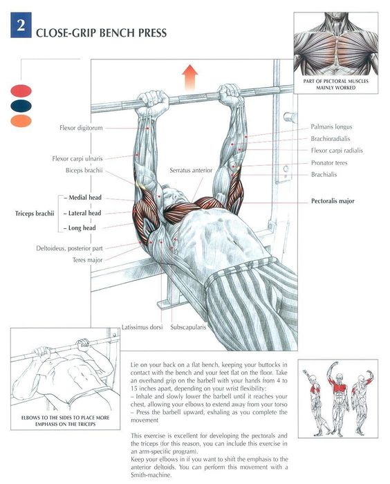 Narrow Grip Bench Presses Part - 22: Performing The Close Grip Bench Press | Chest Muscles, Muscle Building And  Biceps