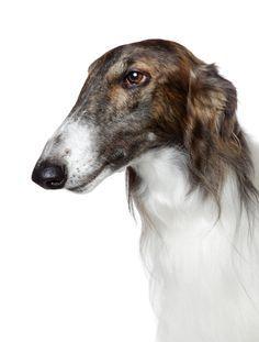 Keep Calm & Cuddle On: List Of Low Maintenance Dog Breeds