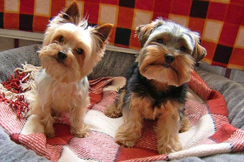 Looks like Max & Roxy!