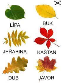 Pro Šíšu: Podzim - listy stromu