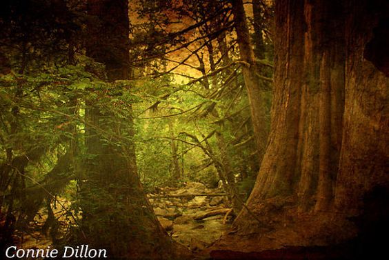 Mystical Redwood Forest 85 x 11 Color Photograph by ConnieDillon10, $17.00