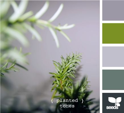 more planted tones  This is similar to the colours I want to use on the exterior of the house - the green will be accents and foliage, along with a deeper purple the colour of jacaranda flowers.