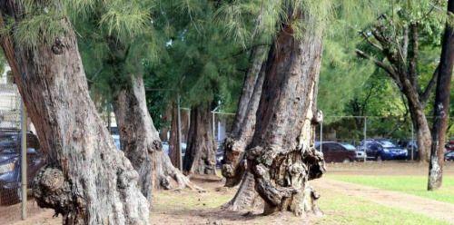 Censuran tala de árboles y celebran anuncio de remodelación de...