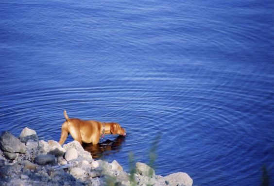 Warm Weather and Pet Water Safety