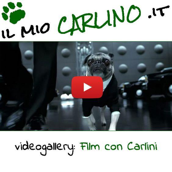 Divertenti spezzoni di film con Cani Carlino protagonisti! #carlini #mib #cani #videodivertenti #carlino