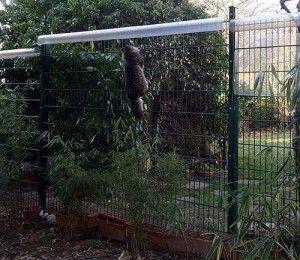 Nach Oben Offene Gehege Sichern Katze Zaun Sibirische Waldkatze Katzengehege